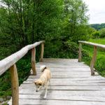 Brücke mit Phoebe