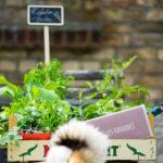Geburtstagskorb für den Kräutergarten