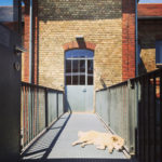 Hund auf der Brücke